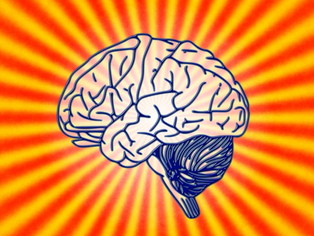 Clip art of human brain