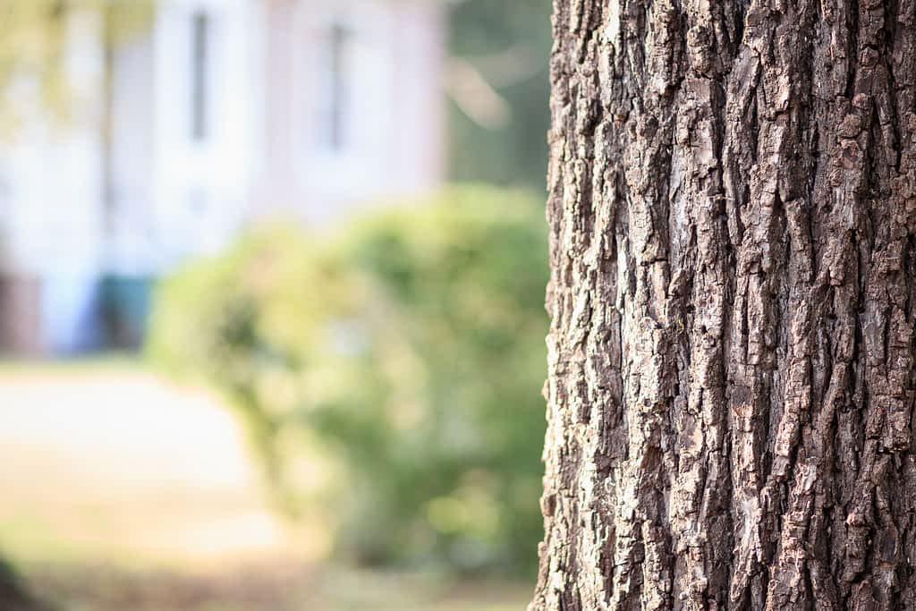 Ridges from a tree bark